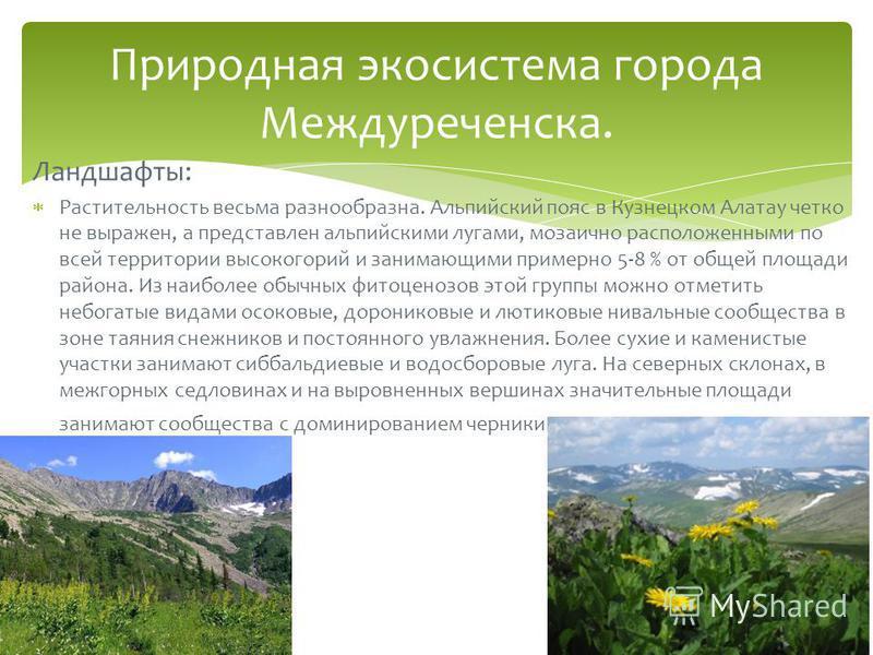 Ландшафты: Растительность весьма разнообразна. Альпийский пояс в Кузнецком Алатау четко не выражен, а представлен альпийскими лугами, мозаично расположенными по всей территории высокогорий и занимающими примерно 5-8 % от общей площади района. Из наиб