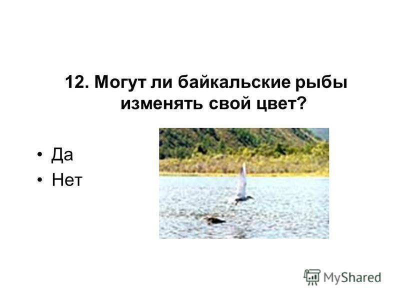 12. Могут ли байкальские рыбы изменять свой цвет? Да Нет