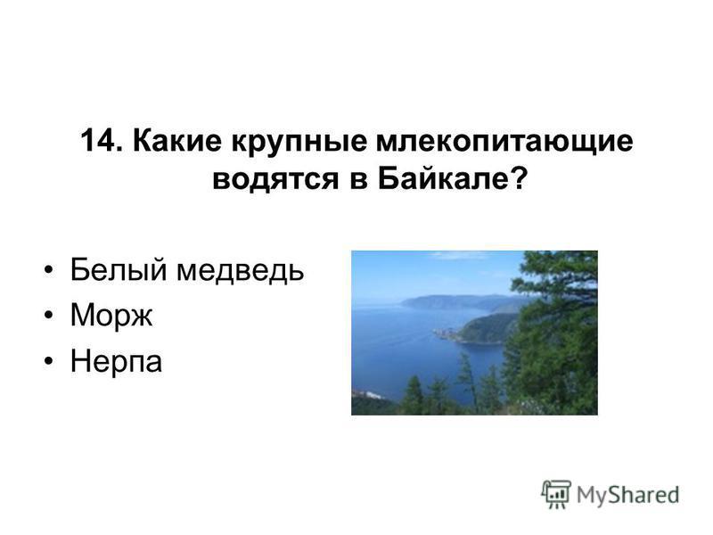 14. Какие крупные млекопитающие водятся в Байкале? Белый медведь Морж Нерпа