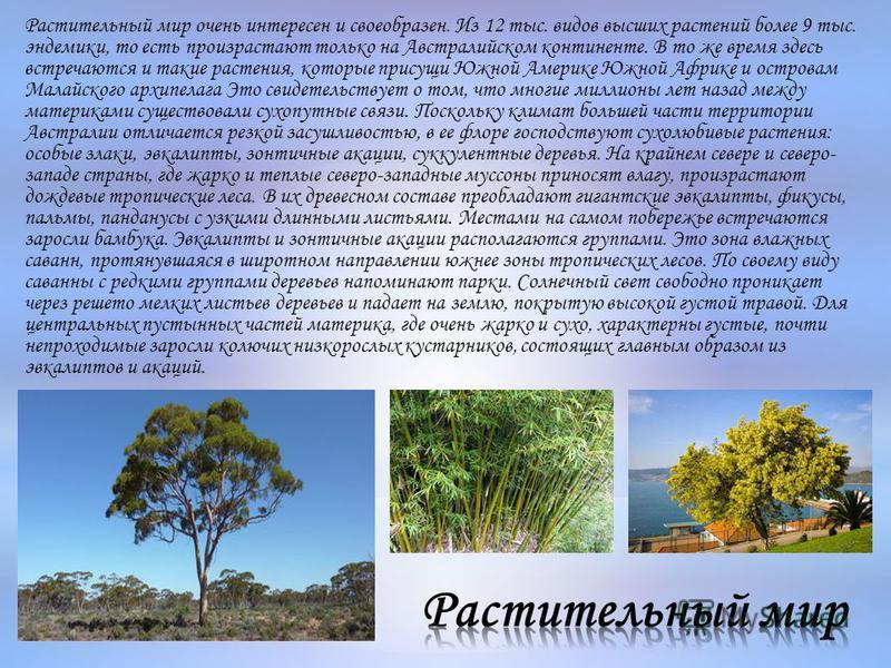 Растительный мир очень интересен и своеобразен. Из 12 тыс. видов высших растений более 9 тыс. эндемики, то есть произрастают только на Австралийском континенте. В то же время здесь встречаются и такие растения, которые присущи Южной Америке Южной Афр