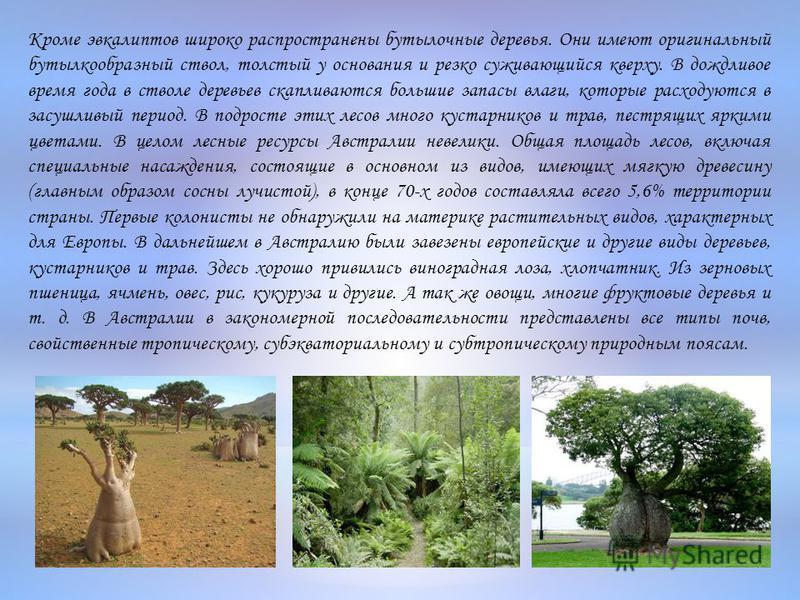 Кроме эвкалиптов широко распространены бутылочные деревья. Они имеют оригинальный бутылкообразный ствол, толстый у основания и резко суживающийся кверху. В дождливое время года в стволе деревьев скапливаются большие запасы влаги, которые расходуются