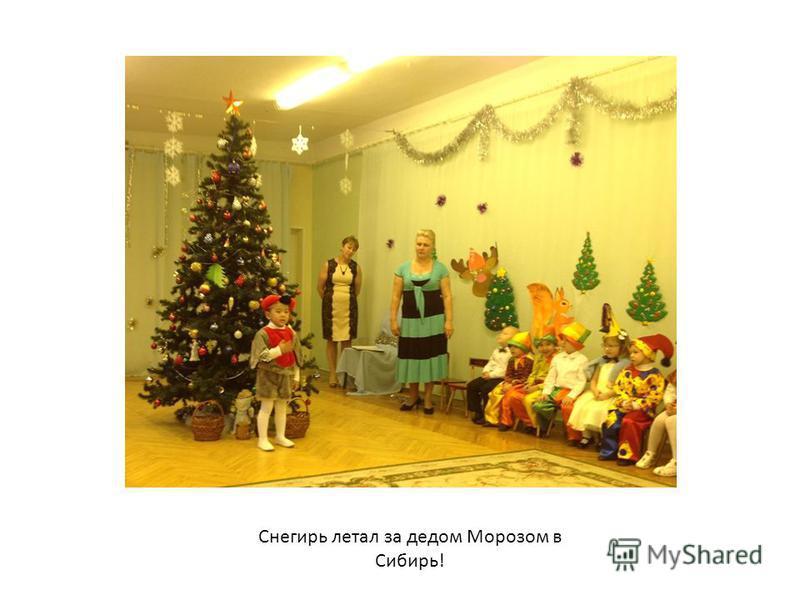 Снегирь летал за дедом Морозом в Сибирь!