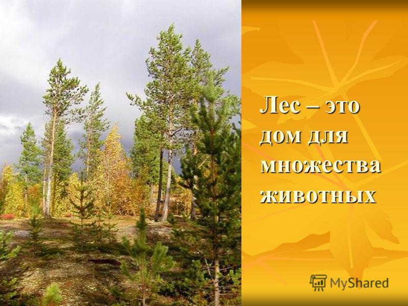 Каждый лес прекрасен и неповторим в любое время. Каждый лес прекрасен и неповторим в любое время. Поэты, художники и музыканты описывают и воспевают его красоту