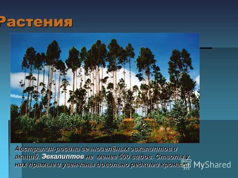 Растения А Австралия-родина вечнозелёных эвкалиптов и акаций. Эвкалиптов не менее 500 видов. Стволы у них прямые и увенчаны довольно редкими кронами.