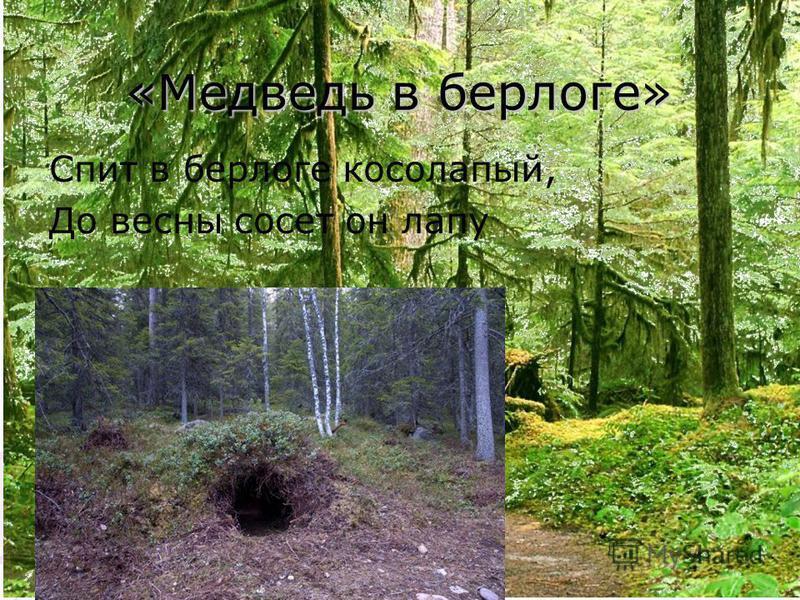 «Медведь в берлоге» Спит в берлоге косолапый, До весны сосет он лапу