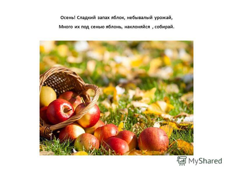 Осень! Cладкий запах яблок, небывалый урожай, Много их под сенью яблонь, наклоняйся, собирай.
