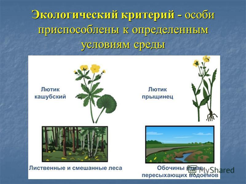 Экологический критерий - особи приспособлены к определенным условиям среды