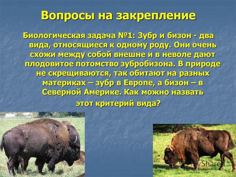 Вопросы на закрепление Биологическая задача 1: Зубр и бизон - два вида, относящиеся к одному роду. Они очень схожи между собой внешне и в неволе дают плодовитое потомство зубробизона. В природе не скрещиваются, так обитают на разных материках – зубр