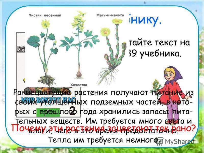 Работа по учебнику. Прочитайте текст на стр. 89 учебника. Раннецветущие растения получают питание из своих утолщённых подземных частей, в которых с прошлого года хранились запасы пита- тельных веществ. Им требуется много света и влаги, чего в это вре