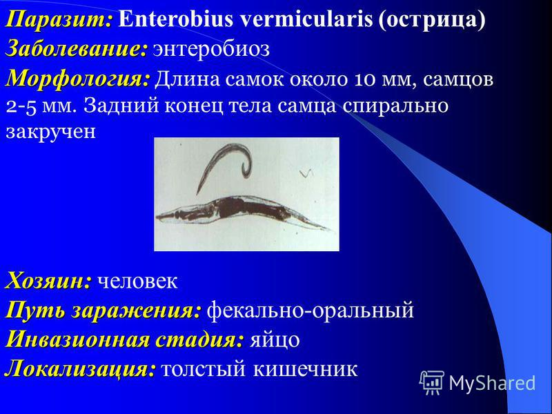 Паразит: Паразит: Enterobius vermicularis (острица) Заболевание: Заболевание: энтеробиоз Морфология: Морфология: Длина самок около 10 мм, самцов 2-5 мм. Задний конец тела самца спирально закручен Хозяин: Хозяин: человек Путь заражения: Путь заражения