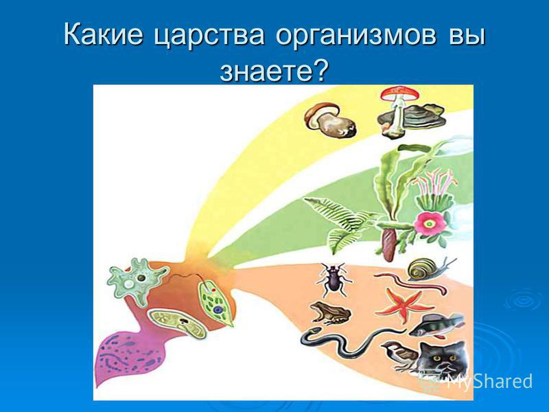 Какие царства организмов вы знаете?