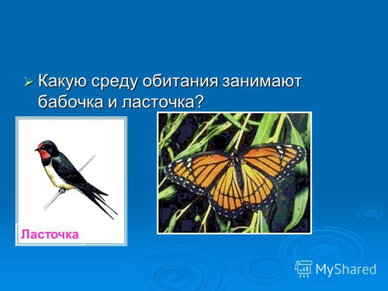 Какую среду обитания занимают бабочка и ласточка? Какую среду обитания занимают бабочка и ласточка? Ласточка