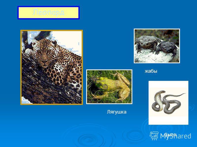 Леопард жабы Лягушка Змея