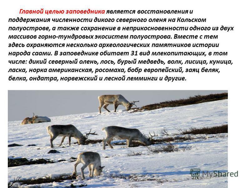 Главной целью заповедника является восстановления и поддержания численности дикого северного оленя на Кольском полуострове, а также сохранение в неприкосновенности одного из двух массивов горно-тундровых экосистем полуострова. Вместе с тем здесь охра