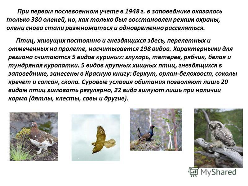 При первом послевоенном учете в 1948 г. в заповеднике оказалось только 380 оленей, но, как только был восстановлен режим охраны, олени снова стали размножаться и одновременно расселяться. Птиц, живущих постоянно и гнездящихся здесь, перелетных и отме