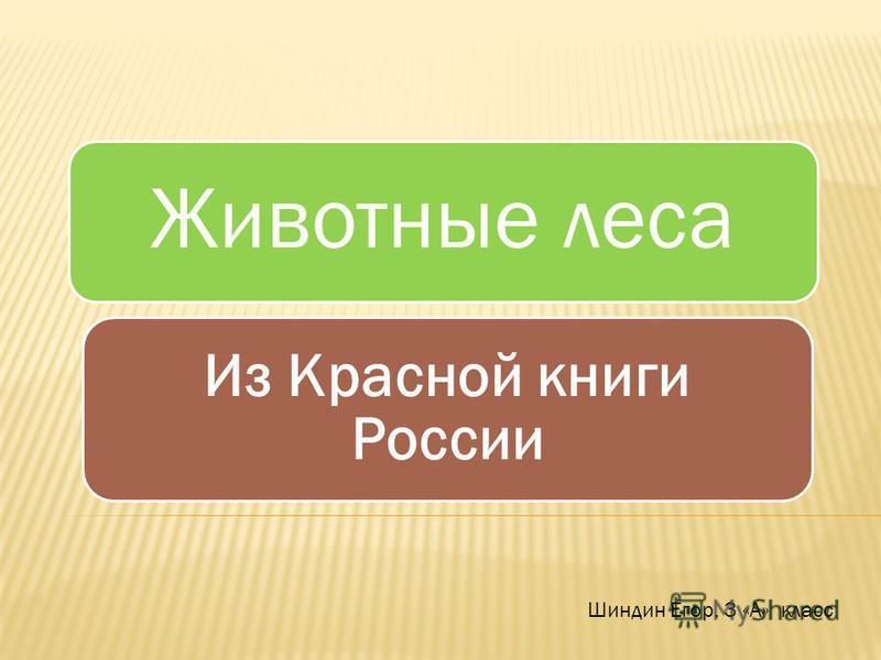 Животные леса Из Красной книги России Шиндин Егор, 3 «А» класс