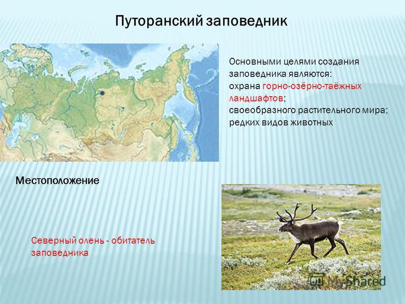 Путоранский заповедник Местоположение Основными целями создания заповедника являются: охрана горно-озёрно-таёжных ландшафтов; своеобразного растительного мира; редких видов животных Северный олень - обитатель заповедника