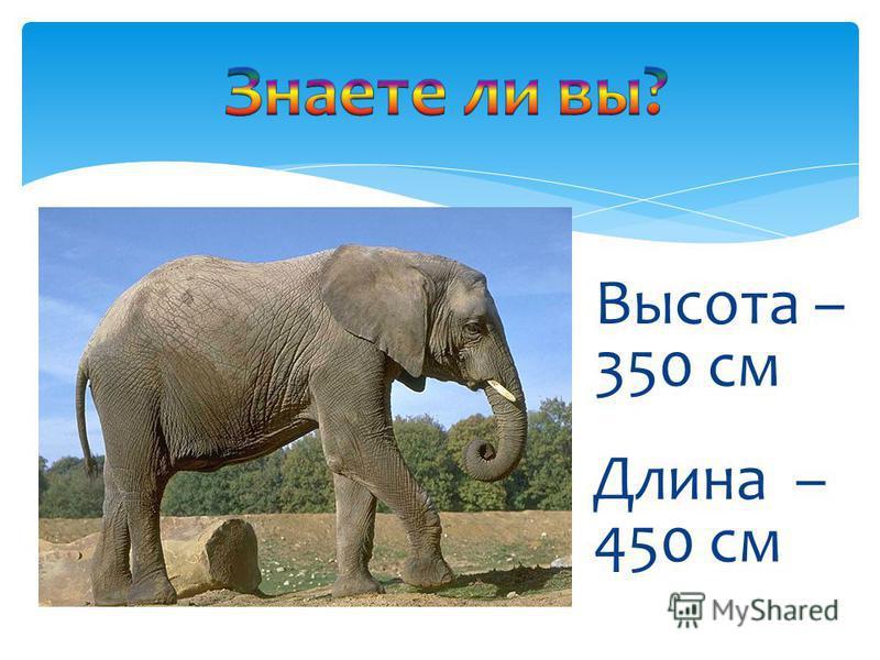 Длина – 450 см Высота – 350 см