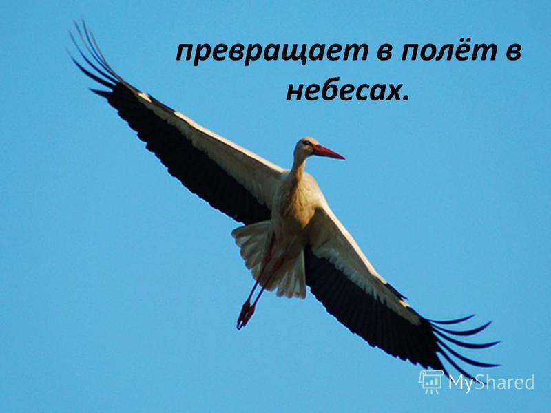 превращает в полёт в небесах.