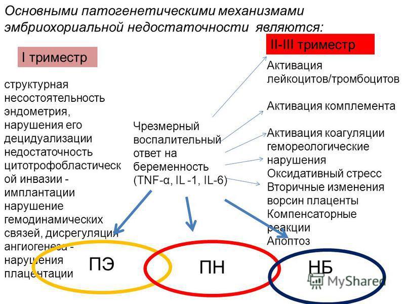 I триместр II-III триместр структурная несостоятельность эндометрия, нарушения его децидуализации недостаточность цито трофобластической инвазии - имплантации нарушение гемодинамических связей, дисрегуляция ангиогенеза - нарушения плацентации Чрезмер