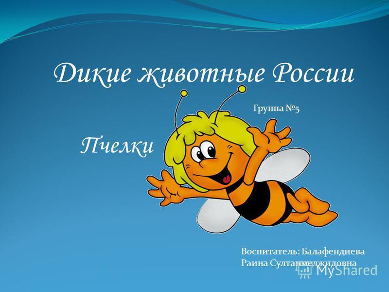 Дикие животные России Группа 5 Воспитатель: Балафендиева Раина Султанмеджидовна Пчелки