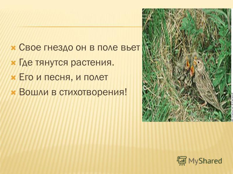 Свое гнездо он в поле вьет Где тянутся растения. Его и песня, и полет Вошли в стихотворения!