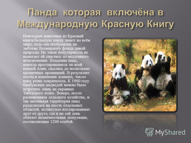 Некоторые животные из Красный книги : Большую панду знают во всём мире, ведь она изображена на эмблеме Всемирного фонда дикой природы. Но такая популярность не помогает ей спастись от медленного исчезновения. Владения панд, некогда простиравшиеся по