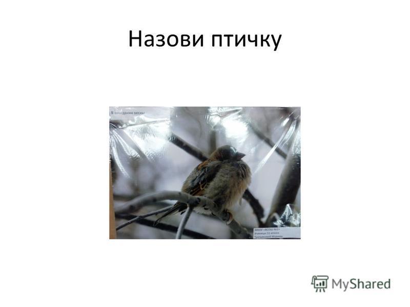 Назови птичку