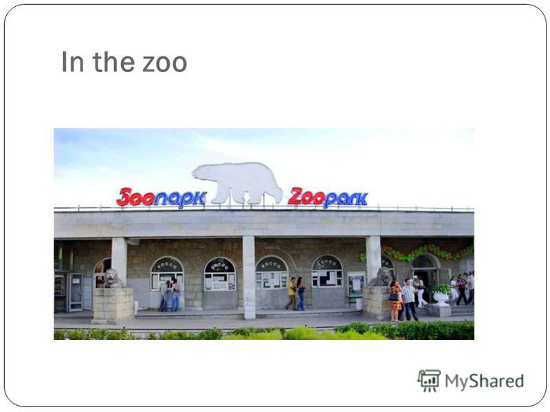 In the zoo