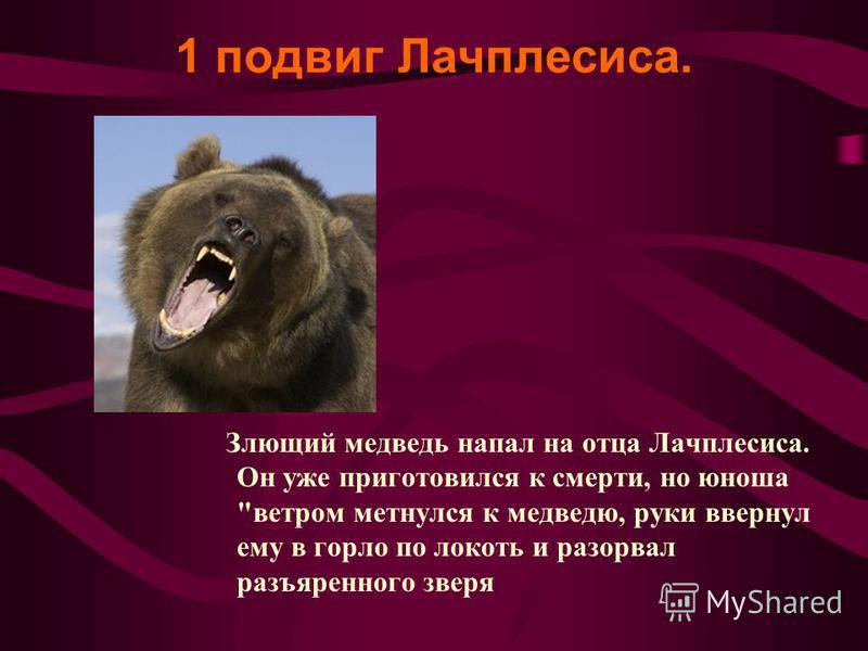 1 подвиг Лачплесиса. Злющий медведь напал на отца Лачплесиса. Он уже приготовился к смерти, но юноша ветром метнулся к медведю, руки ввернул ему в горло по локоть и разорвал разъяренного зверя