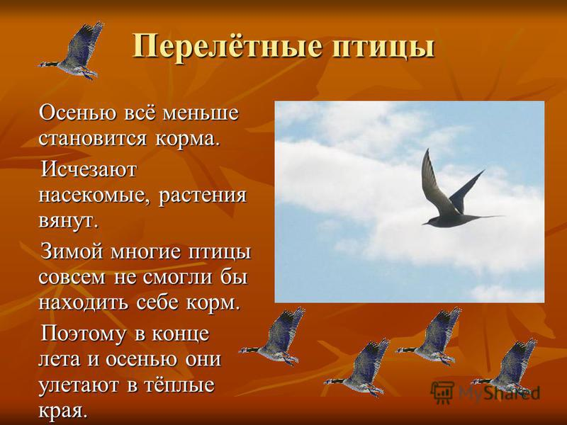 Перелётные птицы Осенью всё меньше становится корма. Осенью всё меньше становится корма. Исчезают насекомые, растения вянут. Исчезают насекомые, растения вянут. Зимой многие птицы совсем не смогли бы находить себе корм. Зимой многие птицы совсем не с