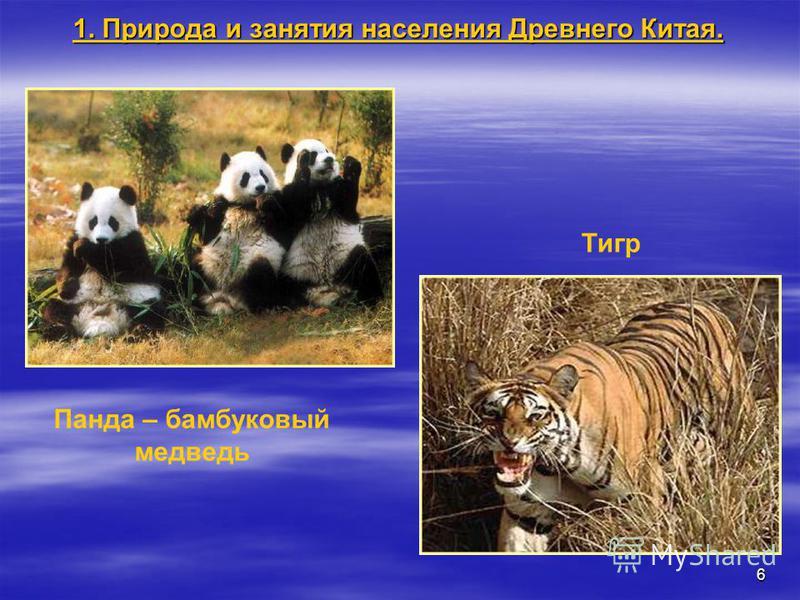 6 Панда – бамбуковый медведь Тигр 1. Природа и занятия населения Древнего Китая.