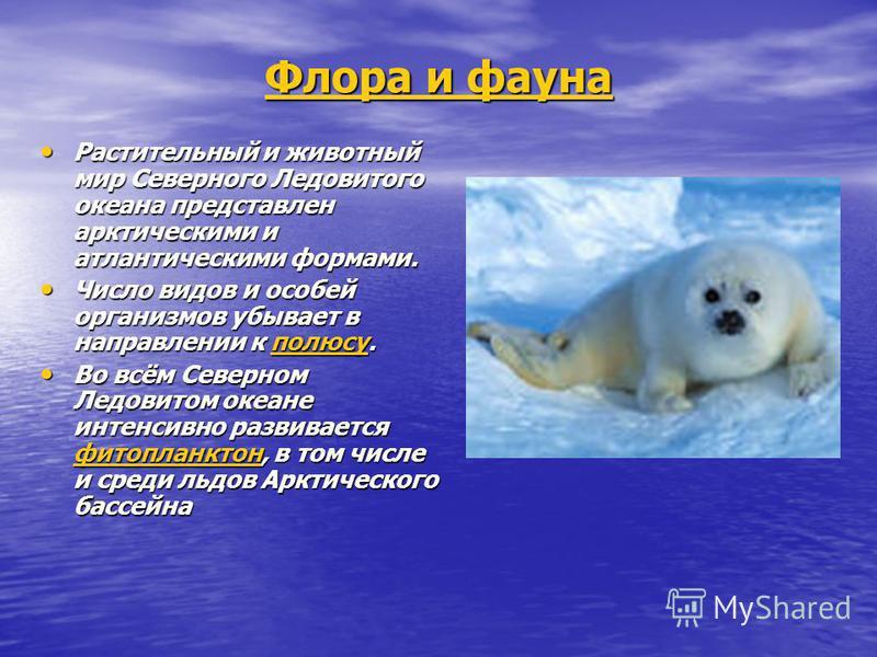 Флора и фауна Растительный и животный мир Северного Ледовитого океана представлен арктическими и атлантическими формами. Растительный и животный мир Северного Ледовитого океана представлен арктическими и атлантическими формами. Число видов и особей о