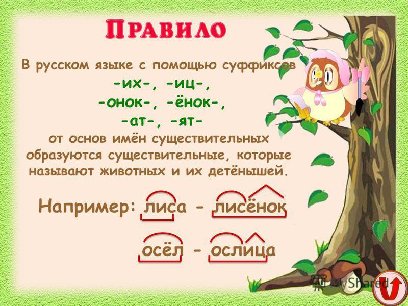 В русском языке с помощью суффиксов -их-, -иц-, -онок-, -ёнок-, -ат-, -ят- от основ имён существительных образуются существительные, которые называют животных и их детёнышей. Например: лиса - лисёнок осёл - ослица