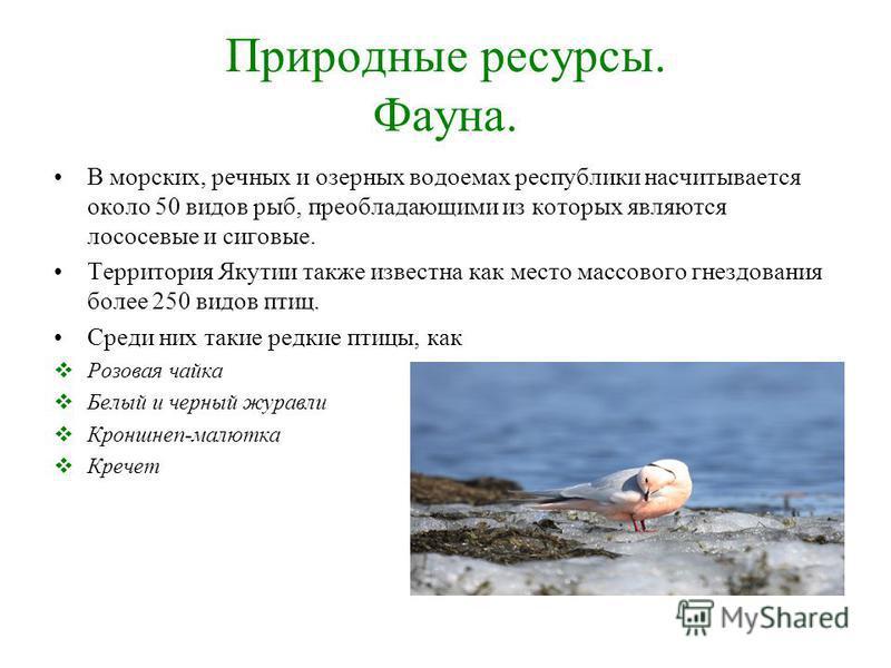 Природные ресурсы. Фауна. В морских, речных и озерных водоемах республики насчитывается около 50 видов рыб, преобладающими из которых являются лососевые и сиговые. Территория Якутии также известна как место массового гнездования более 250 видов птиц.
