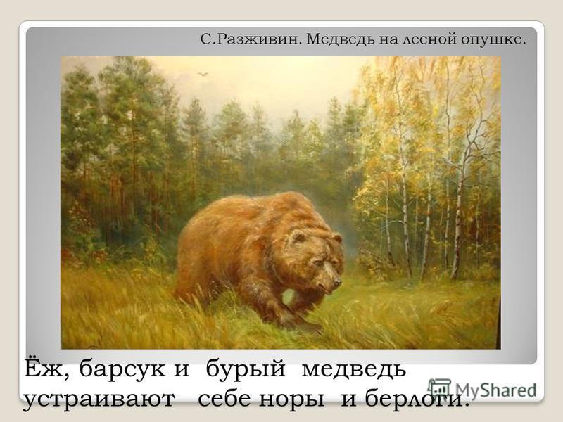Ёж, барсук и бурый медведь устраивают себе норы и берлоги. С.Разживин. Медведь на лесной опушке.