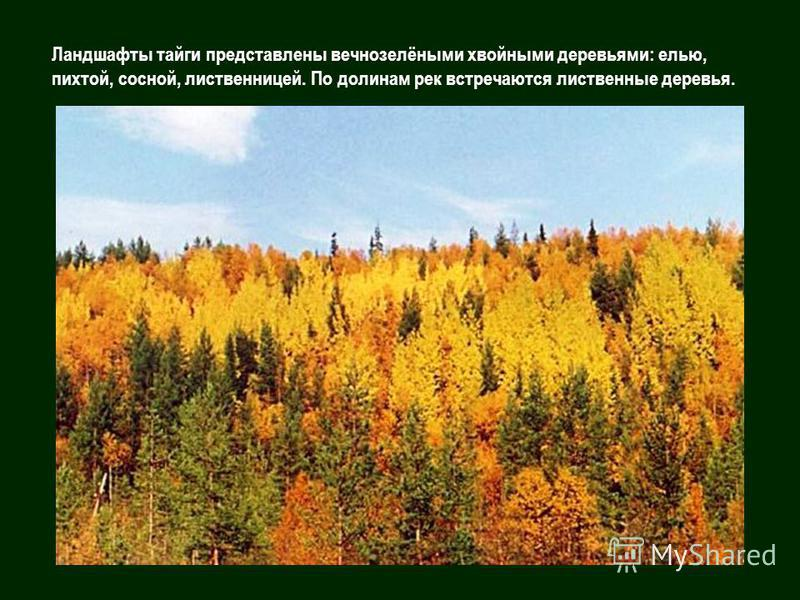 Ландшафты тайги представлены вечнозелёными хвойными деревьями: елью, пихтой, сосной, лиственницей. По долинам рек встречаются лиственные деревья.