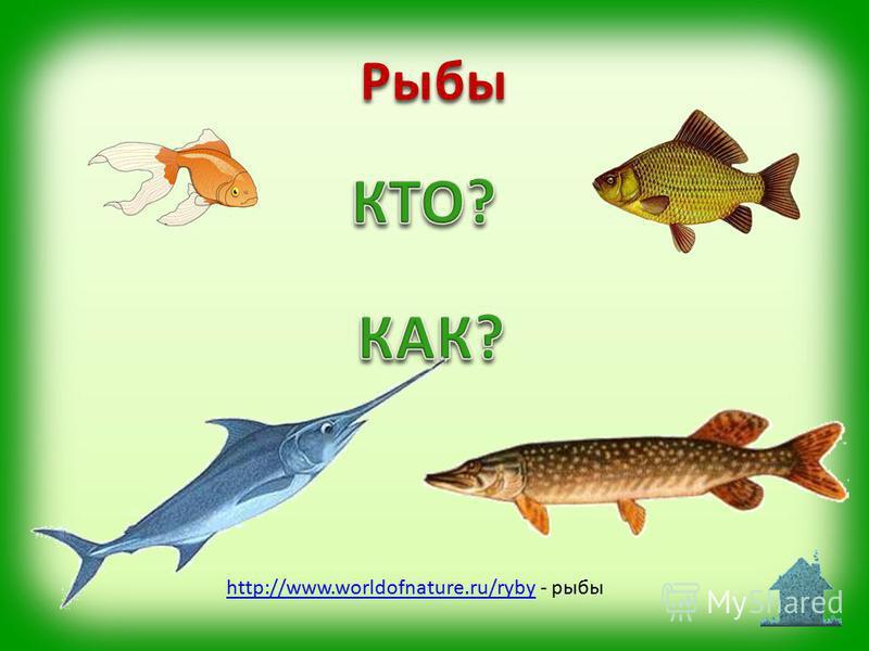 http://www.worldofnature.ru/rybyhttp://www.worldofnature.ru/ryby - рыбы Рыбы