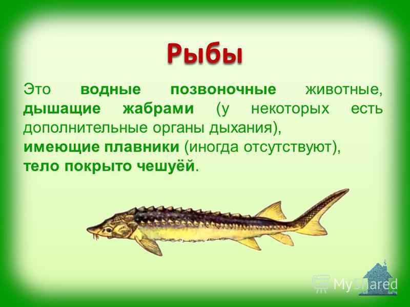 Это водные позвоночные животные, дышащие жабрами (у некоторых есть дополнительные органы дыхания), имеющие плавники (иногда отсутствуют), тело покрыто чешуёй. Рыбы