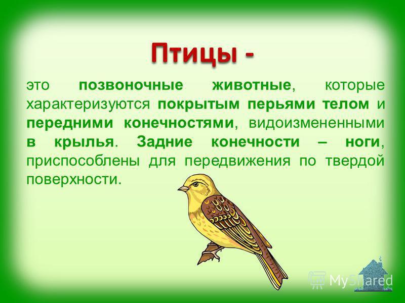 Птицы - это позвоночные животные, которые характеризуются покрытым перьями телом и передними конечностями, видоизмененными в крылья. Задние конечности – ноги, приспособлены для передвижения по твердой поверхности.