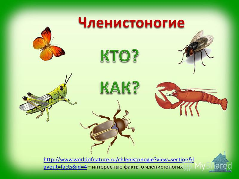 http://www.worldofnature.ru/chlenistonogie?view=section&l ayout=facts&id=4http://www.worldofnature.ru/chlenistonogie?view=section&l ayout=facts&id=4 – интересные факты о членистоногих Членистоногие