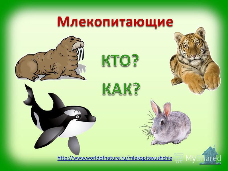 Млекопитающие http://www.worldofnature.ru/mlekopitayushchie