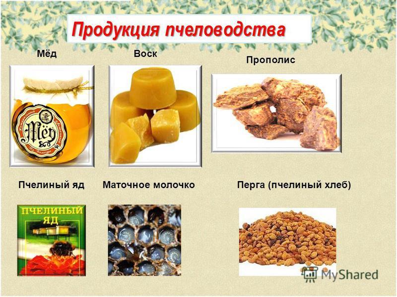 Продукция пчеловодства Мёд Воск Прополис Пчелиный яд Маточное молочко Перга (пчелиный хлеб)