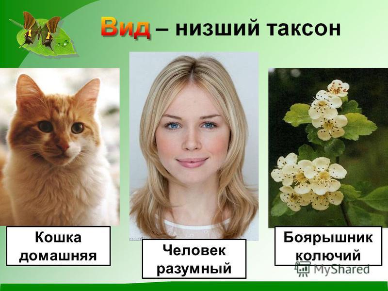 Боярышник колючий Кошка домашняя Человек разумный