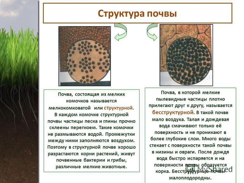 Почва, состоящая из мелких комочков называется мелкокомковатой или структурной. В каждом комочке структурной почвы частицы песка и глины прочно склеены перегноем. Такие комочки не размываются водой. Промежутки между ними заполняются воздухом. Поэтому