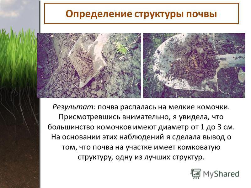 Определение структуры почвы Результат: почва распалась на мелкие комочки. Присмотревшись внимательно, я увидела, что большинство комочков имеют диаметр от 1 до 3 см. На основании этих наблюдений я сделала вывод о том, что почва на участке имеет комко