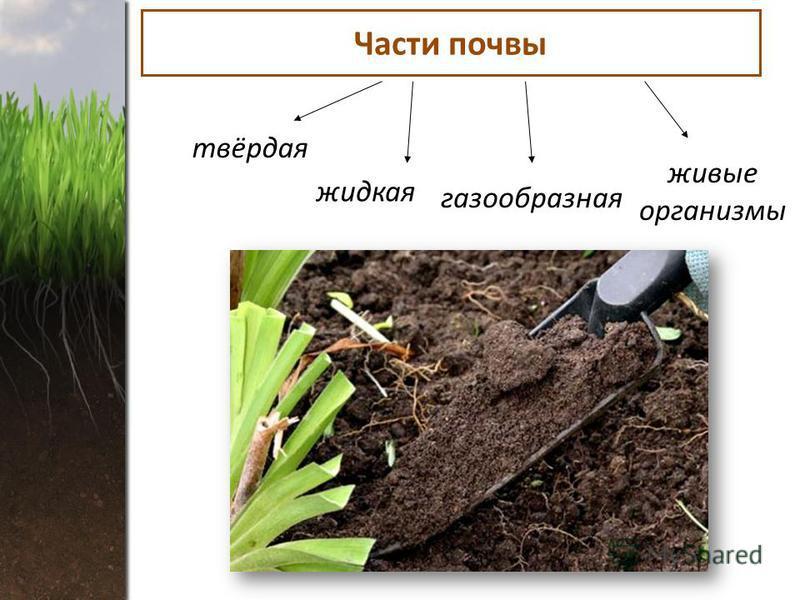 Части почвы твёрдая жидкая газообразная живые организмы