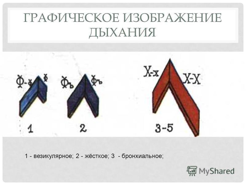 ГРАФИЧЕСКОЕ ИЗОБРАЖЕНИЕ ДЫХАНИЯ 1 - везикулярное; 2 - жёсткое; 3 - бронхиальное;