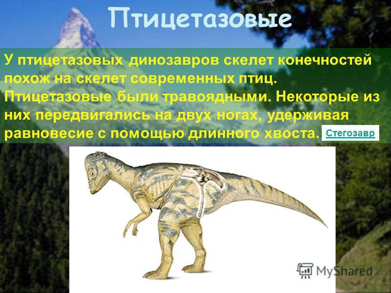 У птицетазовых динозавров скелет конечностей похож на скелет современных птиц. Птицетазовые были травоядными. Некоторые из них передвигались на двух ногах, удерживая равновесие с помощью длинного хвоста. Птицетазовые Стегозавр