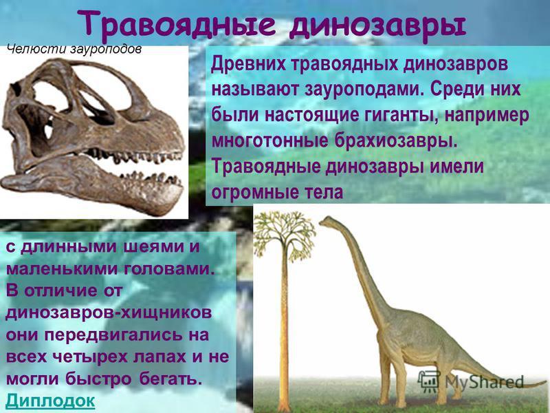 Древних травоядных динозавров называют зауроподами. Среди них были настоящие гиганты, например многотонные брахиозавры. Травоядные динозавры имели огромные тела Травоядные динозавры с длинными шеями и маленькими головами. В отличие от динозавров-хищн